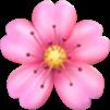 Cherry Blossom Symbol